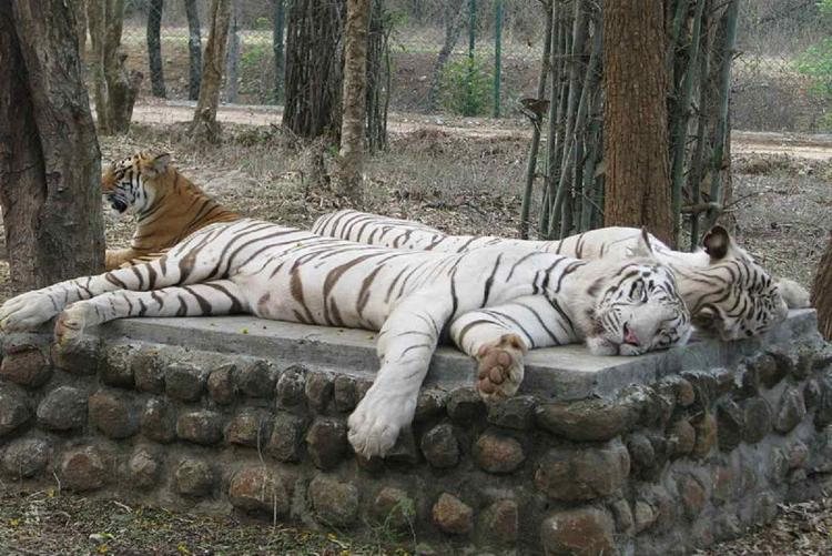 To protect animals from COVID-19 Karnataka zoos have a minimum contact policy