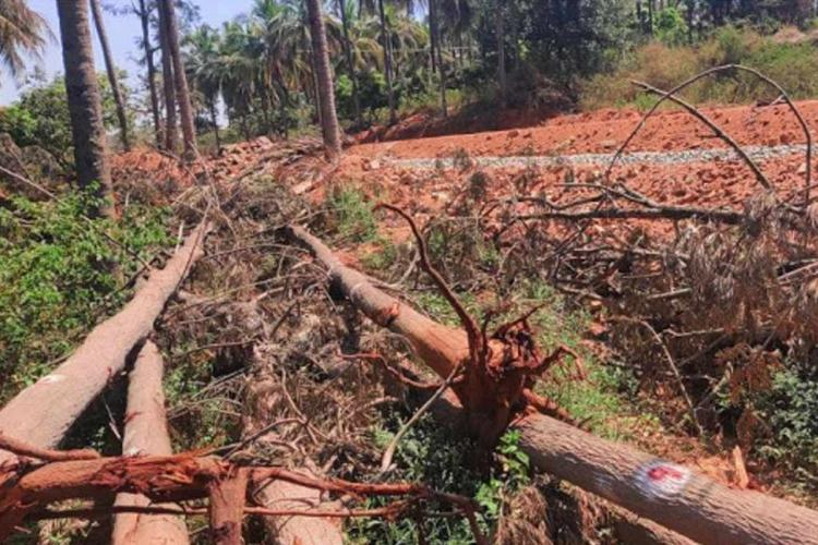 Trees cut along the KRDCL road expansion project in Bannergahata Ecosensitive Zone