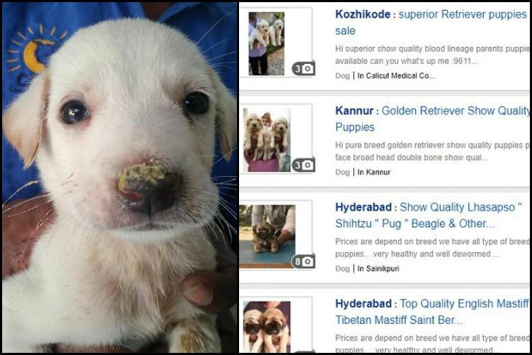 Illegal Sale Of Dogs Flourishes Online Why Activists Are Up In Arms