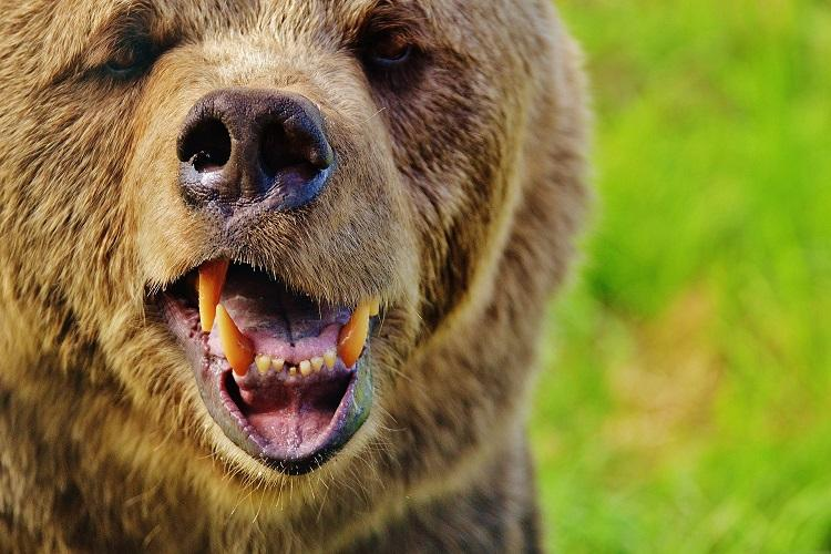 Man grievously injured after being attacked by bear in Ooty