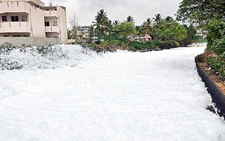BDA starts removing weeds from Bengalurus Bellandur Lake