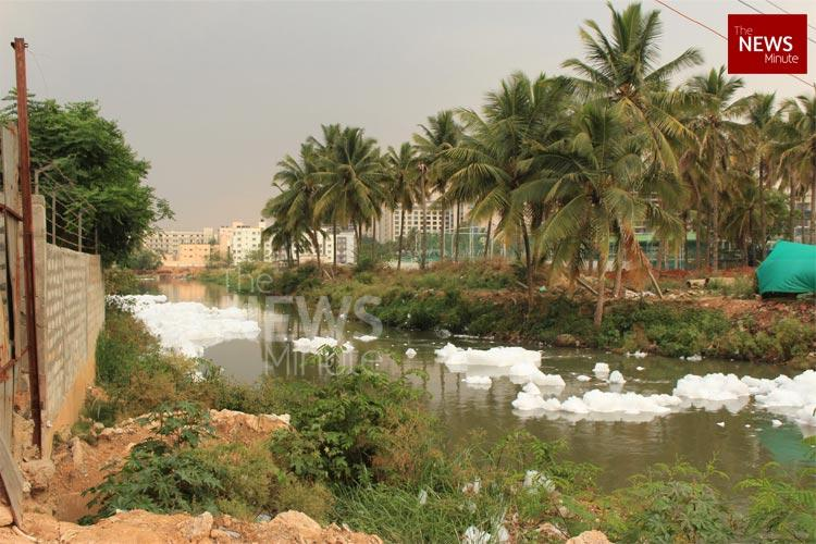 Man-made catastrophe NGT Commission submits scathing report on Bellandur Lake