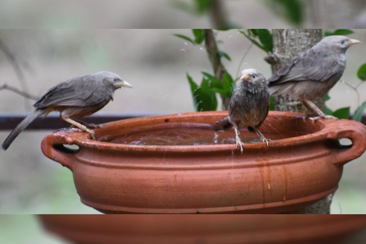 Kerala techies start BirdBathChallenge to help birds stay cool this summer