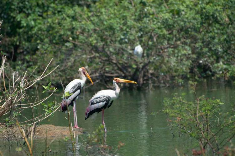 Birds at Vendantangal sanctuary standing by the water in Chengalpattu district, Tamil Nadu.