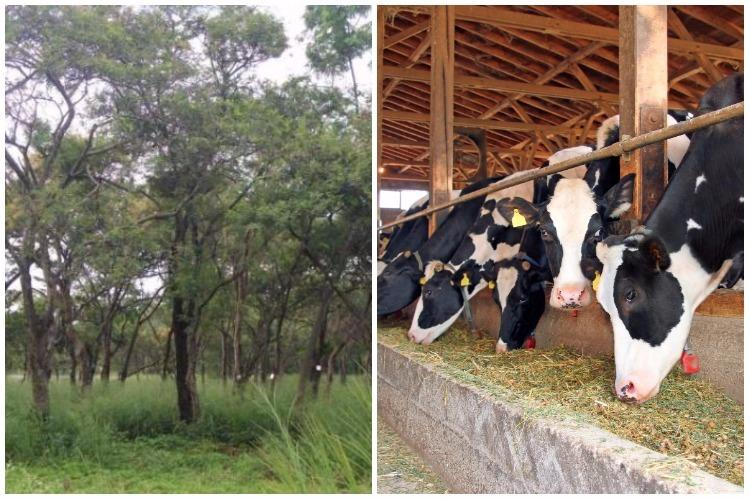 Ktaka Milk Federation to cut 1500 trees to make way for research farm