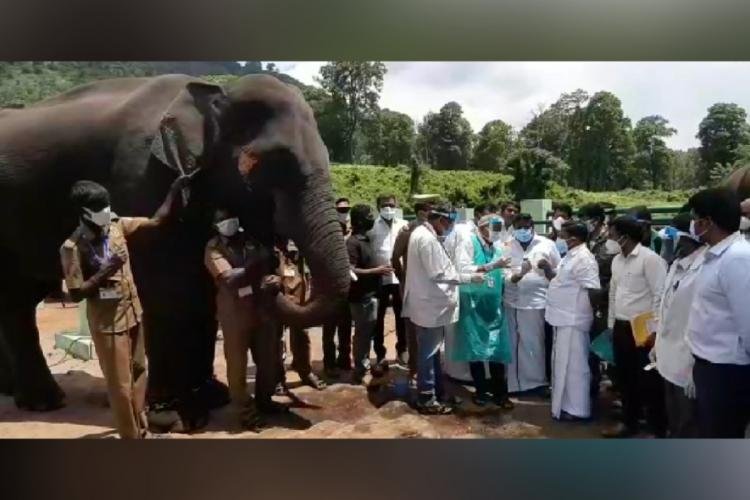 Medical team along with Forest Minister while testing the swab of an elephant for novel coronavirus