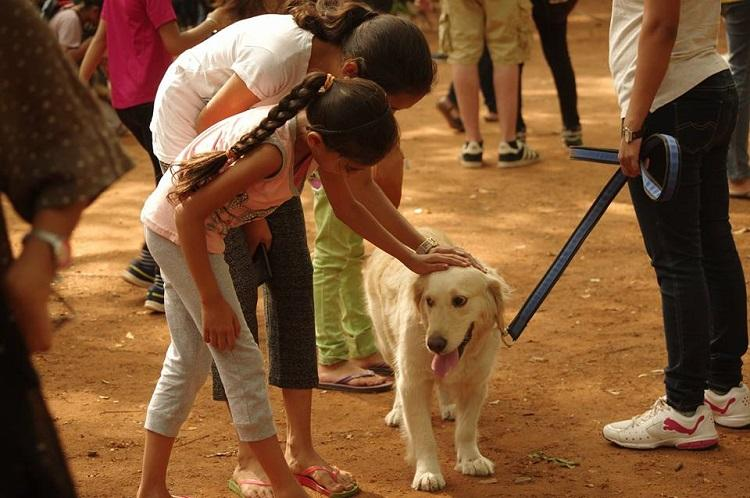 Friends of pets Bengaluru volunteer group carries out drive to license vaccinate dogs