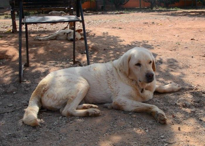 Watch What happens to abandoned dogs in Bengaluru