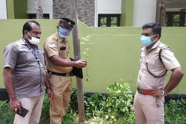 Two excise inspectors are on a road side with a third man in regular clothes near some plants One of the inspectors holds two saplings in his hand