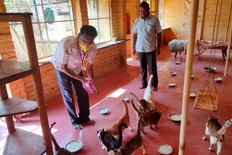 After three cats die in shelter Madurai MLA intervenes to supply food