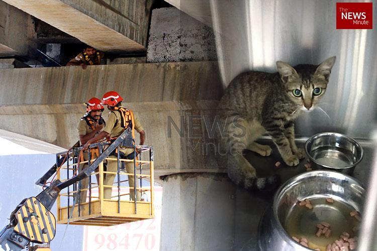 Cat stuck under Kochi metro bridge for few days finally rescued by firefighters