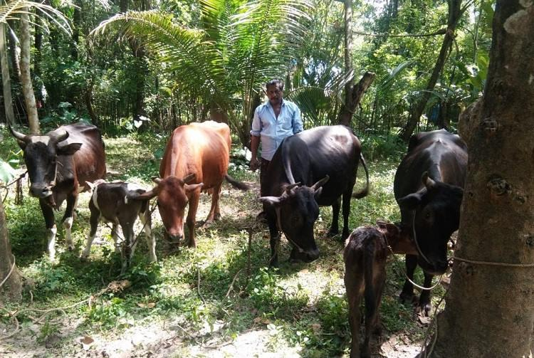 Eight farmers in Keralas Wayanad get cattle under donate a cow campaign