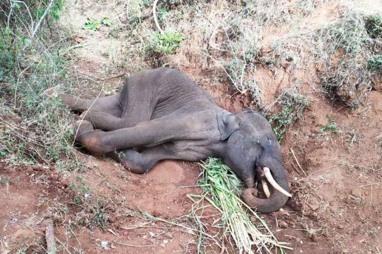 Coimbatore Elephant dead
