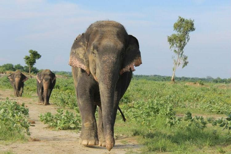 World Elephant Day 10 reasons to love the jumbos