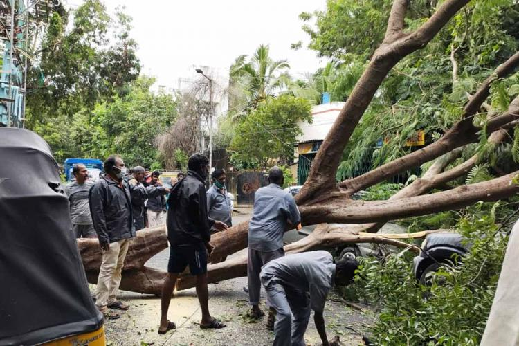 Authorities clearing trees uprooted due to Cyclone Nivar in Chennai