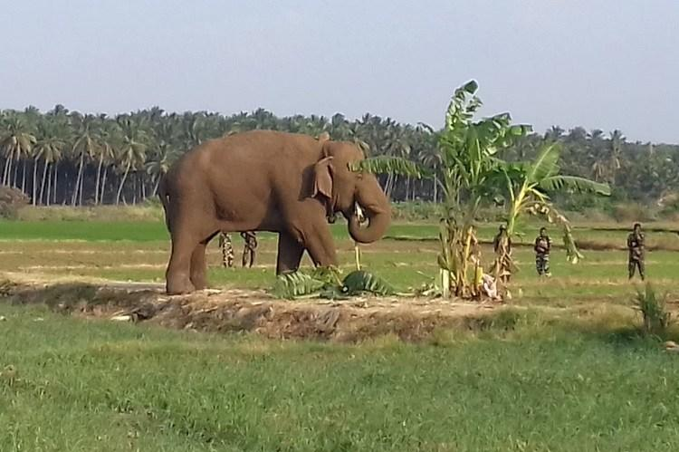 Chinnathambi to be captured and sent to elephant camp TN Forest dept to HC