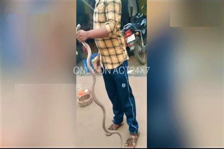 Video Andhra man wraps cobra around his neck it bites and kills him