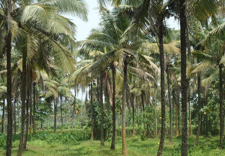 Ktaka govt plans to market neera to earn Rs 4500 crore income