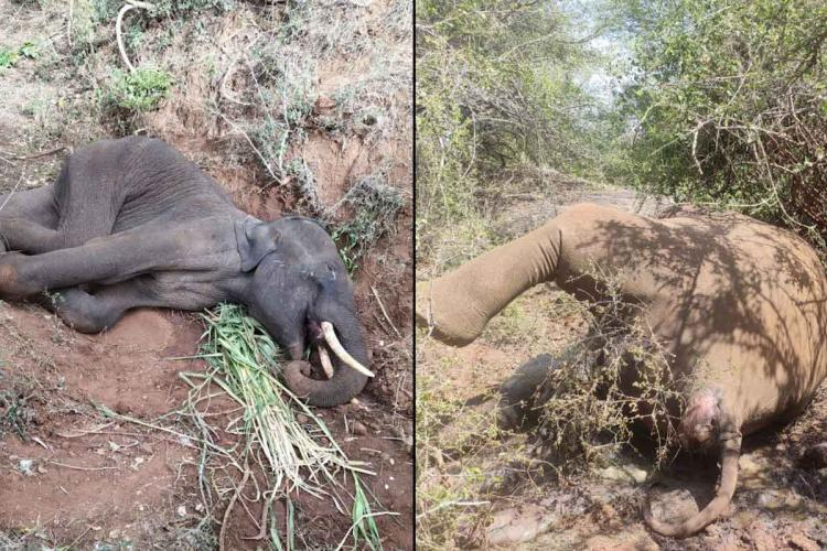 14 elephants die in Coimbatore forests in 2020 Experts point to several factors