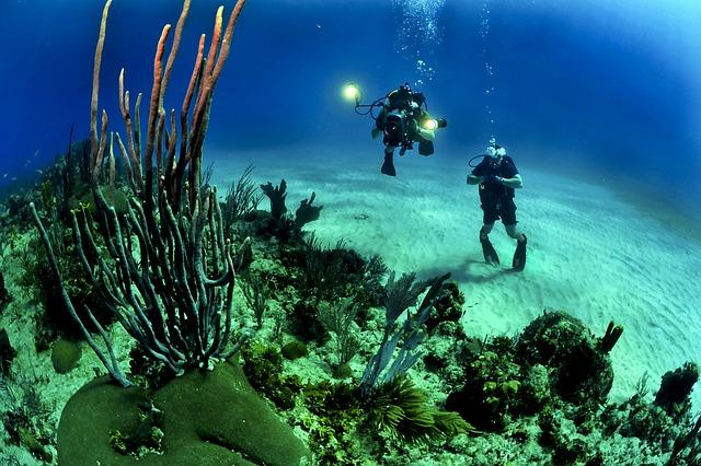 How many undiscovered creatures are there in the ocean