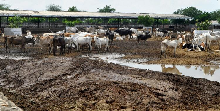 Third world war will be over the cow says MP govt officer and former VHP man