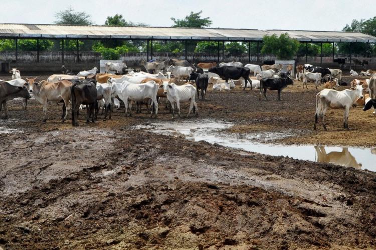 After UP gau rakshaks in Karnataka want crackdown on illegal meat shops