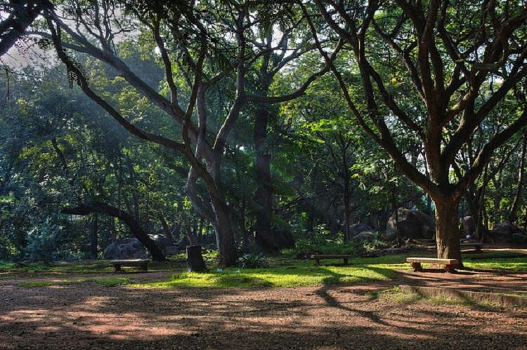 Every tree in Bengaluru needs surgery says citys green doctor