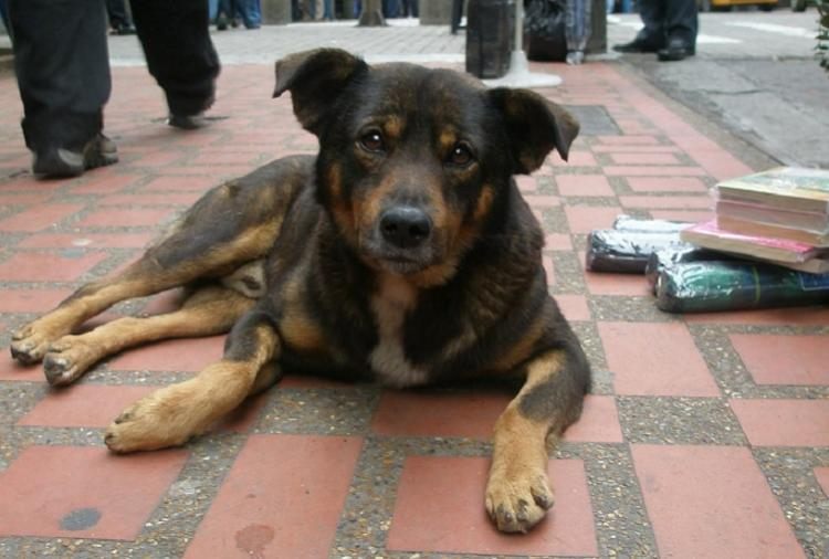 See an animal in distress but dont know what to do In Chennai turn to AnimApp