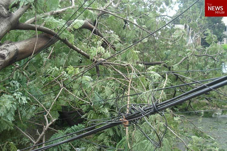 16 deaths more than 12000 trees uprooted The havoc wreaked by Cyclone Vardah