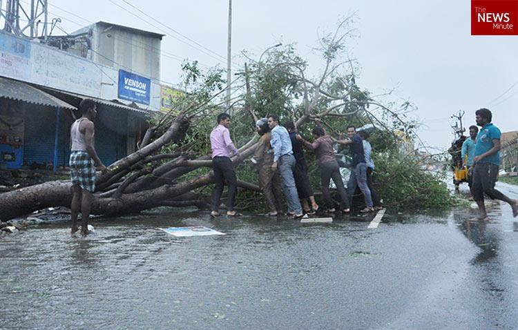 Chennai city corp to sell 65000 tons of trees felled by Vardah but is the estimate correct
