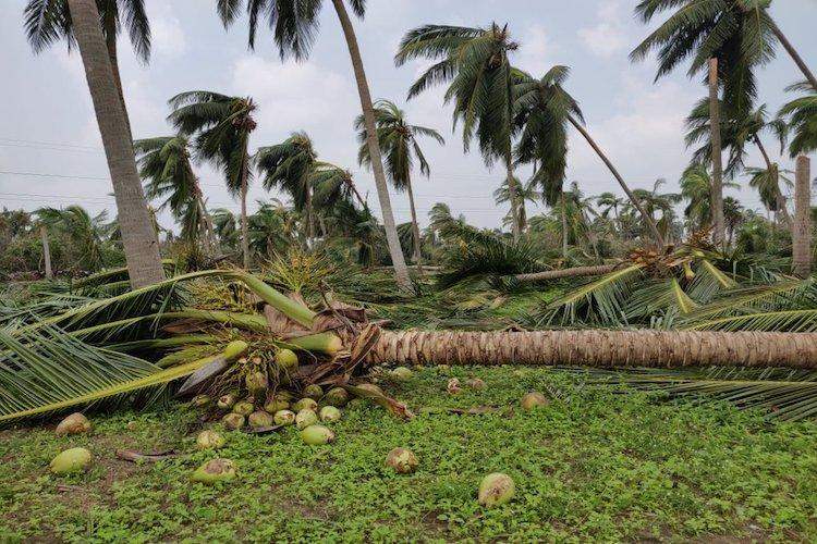 TN cyclone toll rises to 33, opposition alleges poor relief work