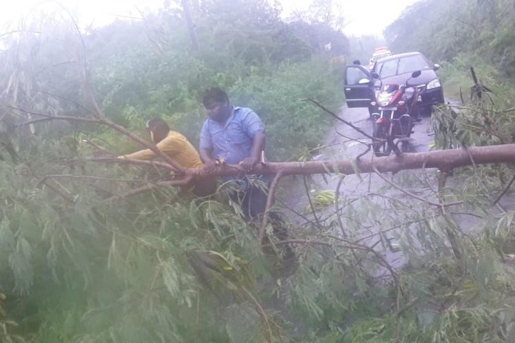 Nellore police removing a fallen tree from the road