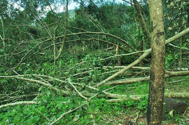 Ockhi leaves 7 lakh fallen plantations in Kanyakumari economy set to face setback