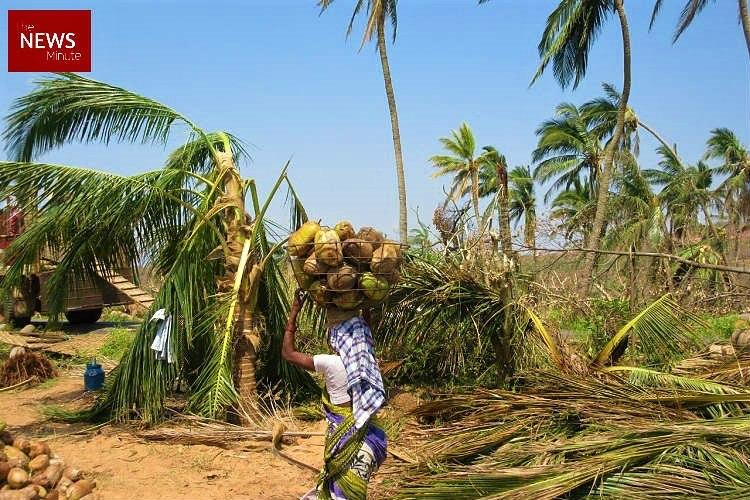 Ground Report In cyclone-hit Srikakulam coconut and cashew farmers are the worst-hit