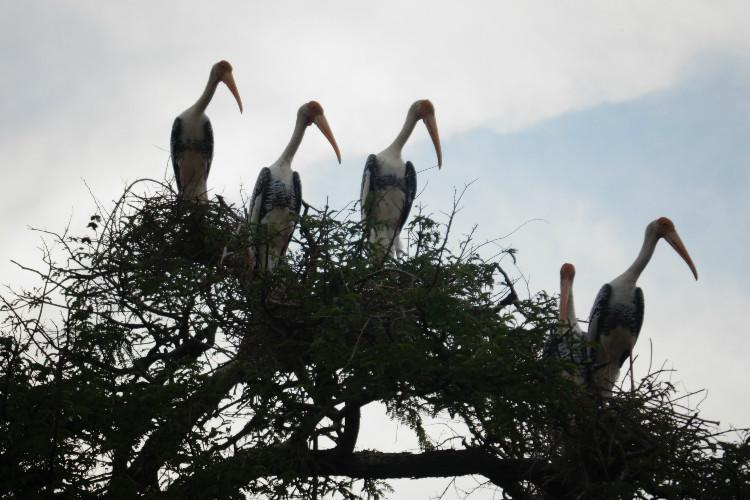 The Telangana village that waits for Siberian birds every winter