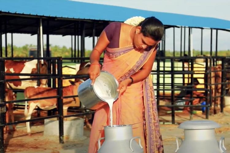 A trans woman transfers litres milk into a container at a dairy farm in Tamil Nadu called Manthithope Transgender Milk Producer Society