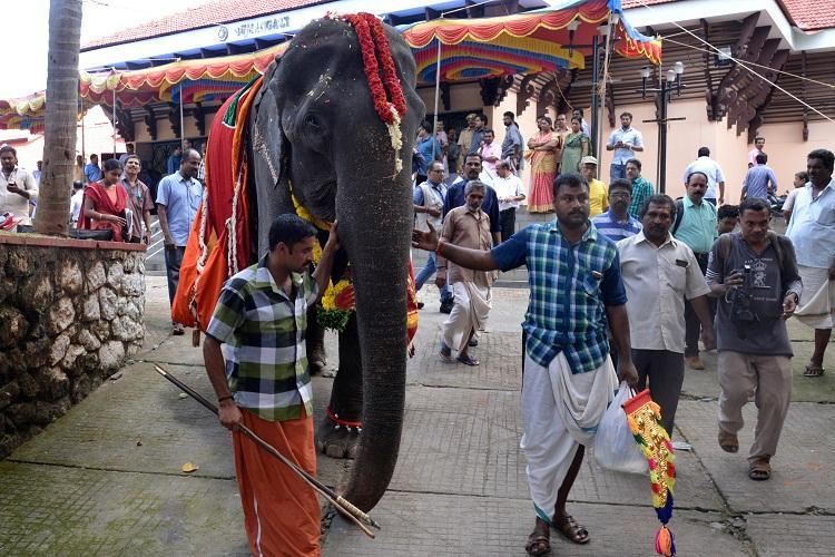 Kerala animal rights body contests 86-year-old elephants entry into Guinness