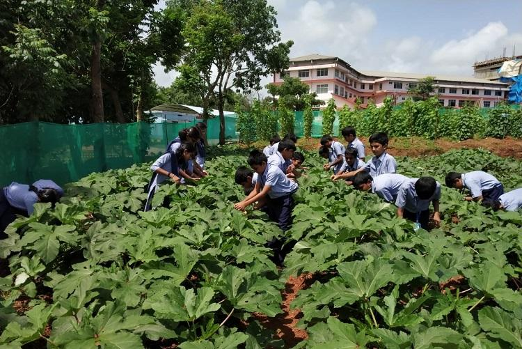 Back to the roots This Mangaluru school has made agriculture a compulsory subject