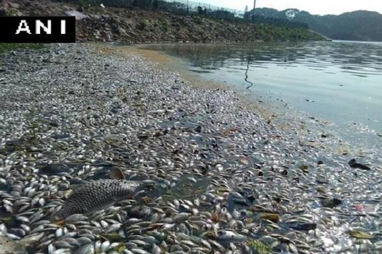 Several dead fish snails found floating in Bengalurus Madiwala Lake