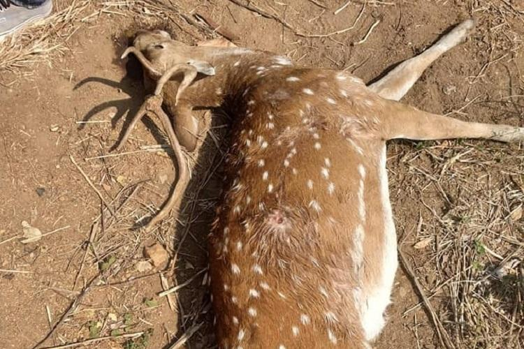 Deer dies in Hyd Uni Activists suspect poaching authorities claim wild dogs attacked