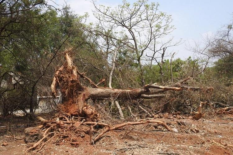 Hyderabad University students oppose tree chopping in campus for new road demand clarification