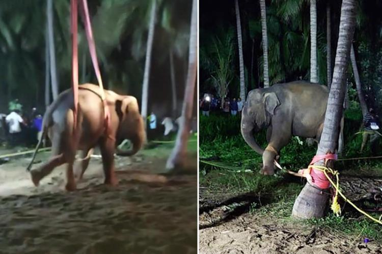 Dharmapuri elephant rescued from well collage of photos taken after it was taken up
