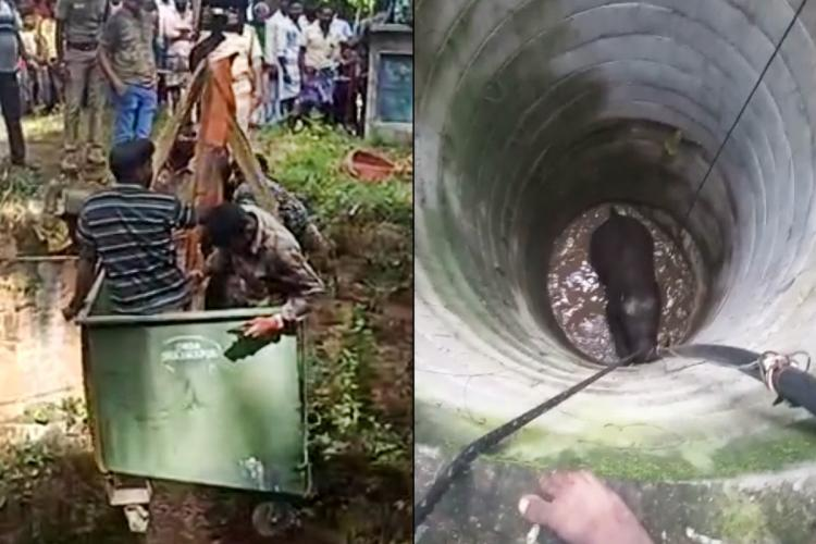Dharmapuri elephant that fell into well being rescued with a crane