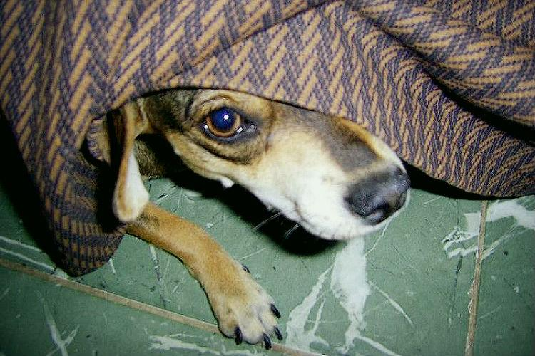 How pets are affected during Deepavali and what you can do to help