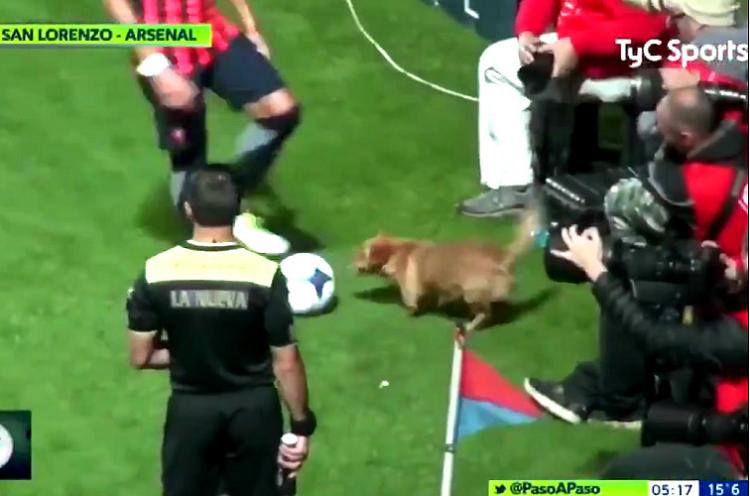 Watch This Arsenal vs San Lorenzo football match had the most adorable interruption