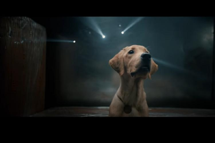 A labrador looking up as flash lights are glowing behind him in the dark