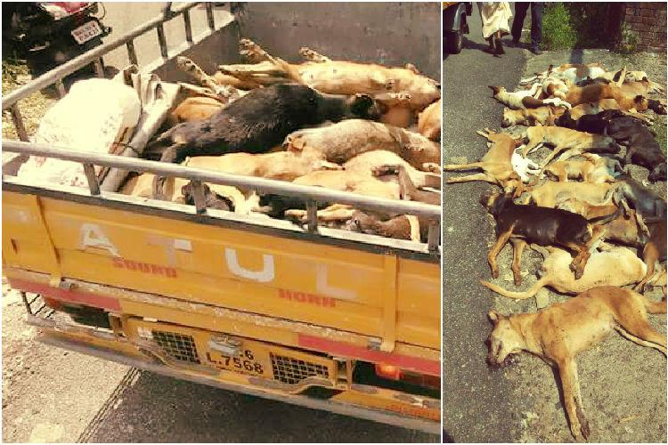 Kerala man dies in stray dog attack residents beat 27 dogs to death in retaliation