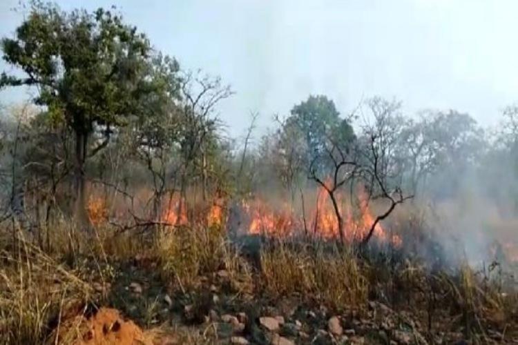 Man-made fire burns six hectares of Nallamala forest in Telangana