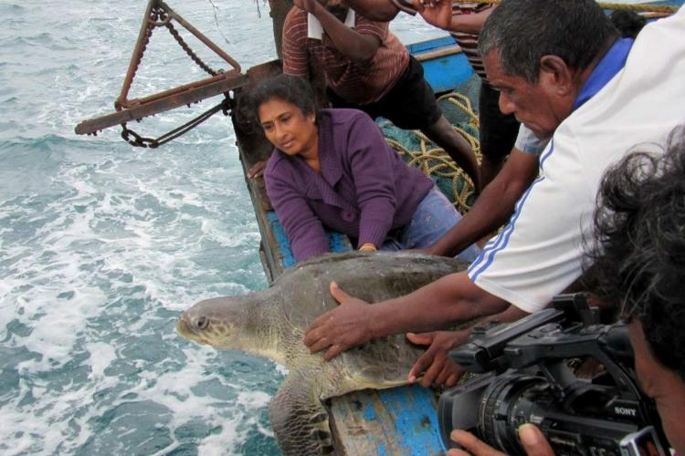 Dr Supraja Dharini freeing a rescued Olive Ridley turtle into the ocean