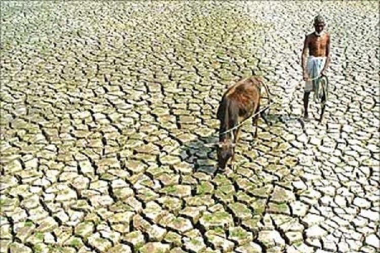 Farmer suicides water rationing cattle deaths Chikkamagalurus water woes